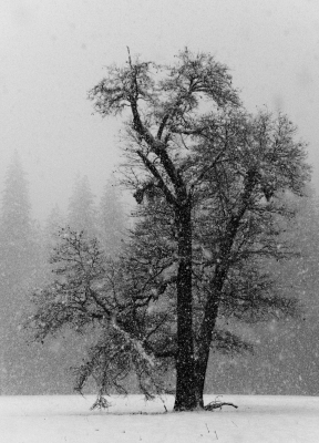 Alone In A Snow Storm