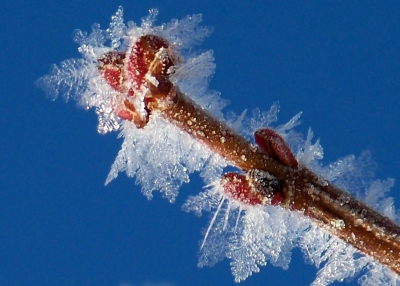 Frozen Branch Detail