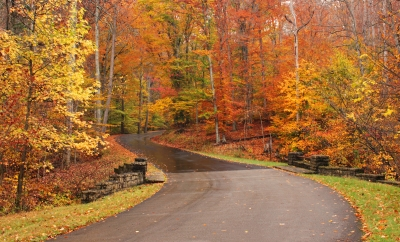 Autumn Road In The Bernheim Forrest