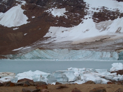 Ice Bergs At Cavell Pond