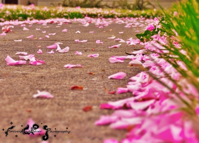 A Pink Walkway