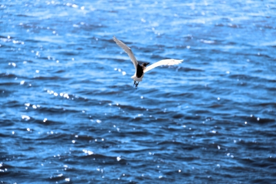 Bird Fly On The Water
