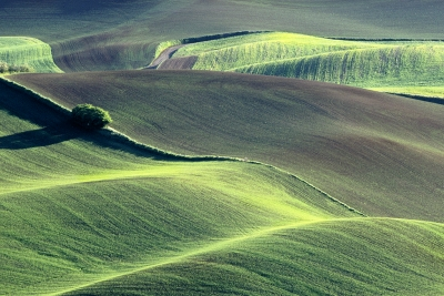 Spring In The Palouse