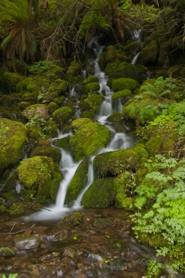 Waterland Olympic Np