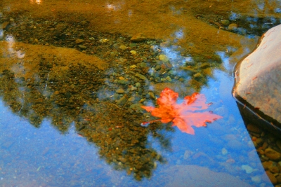 Fall Leaf And Color North Santiam