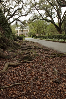 Oak Alley Plantation (0237a)