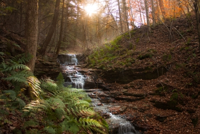 Along The Finger Lakes Hiking Trail