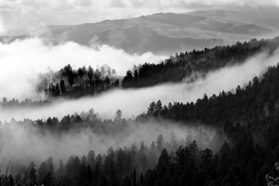 Hellroaring Fog And Trees