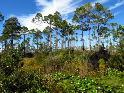The Land Of The Trembling Earth Aka The Okefenokee Swamp