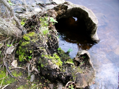 More Than Just A Stump In The Water