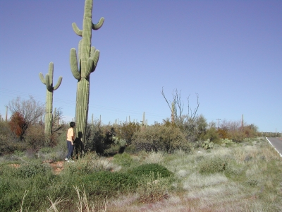 Me And The Cactus People