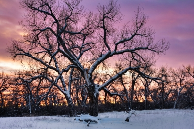 Sunrise And Cottonwoods – Two Moon Park