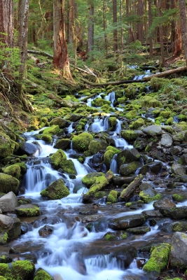 Stream In Olympic Np