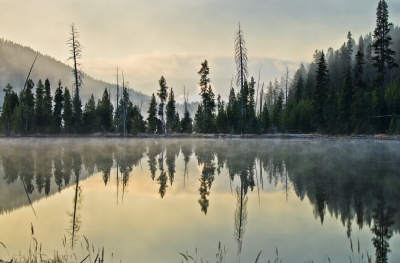 Foggy Morning In Yellowstone