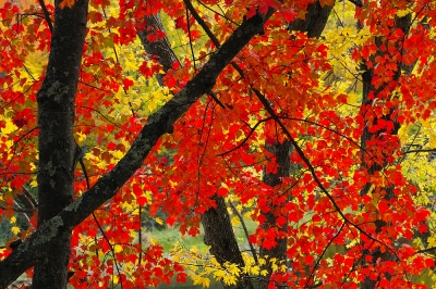 Colr Contrasts In Autumn