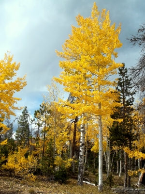 Aspen Highlights