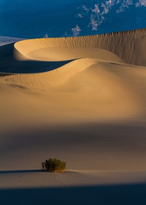 Sunrise At Mesquite Dunes