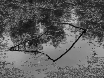 Branch Reflection In Black And White