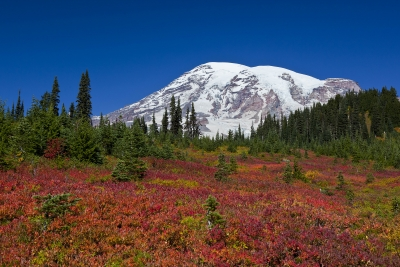 Autumn In Paradise, Mt. Rainier National Park