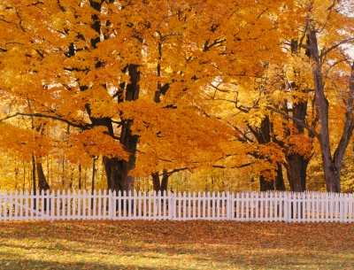 Vermont White Fence