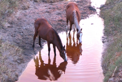At The Evening Watering Hole