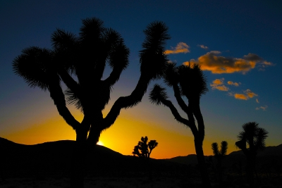 Sunset:  Joshua Tree National Park