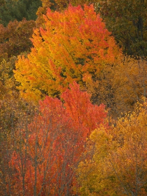 Fall Foliage In Tennessee