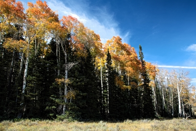 High Country Autumn