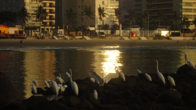 Birds Sitting Out On The Rocks
