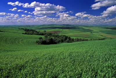 Steptoe Butte Wheat Fields