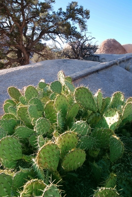 Cactus, Tree And Rock Spine