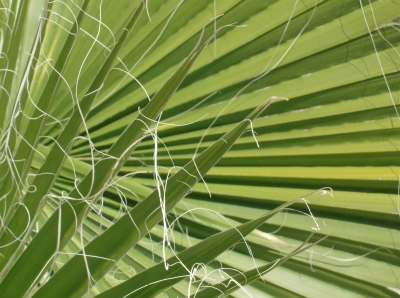 Palm Leaves Criss-cross