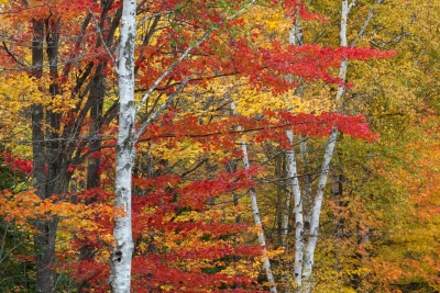 Colors Of The Northwoods