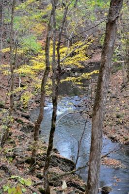 Clifton Gorge – Fall's Final Moments