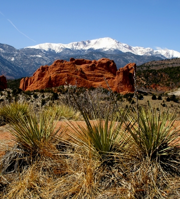Yuccas, Kissing Camels Rock And Pikes Peak