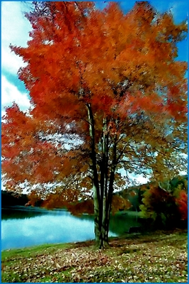 """""""beauty Of The Sugar Maple"""""""