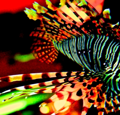 All A-glow Lion Fish