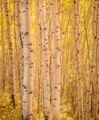 Aspens All Aligned