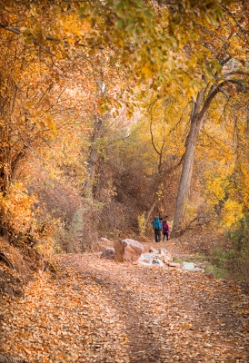 Harvest Colors In Havasupai