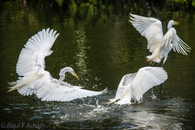 Dive Bombing Stack