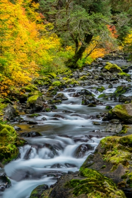 Fall Colors On The Sol Duc River