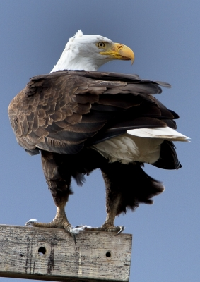 The Eye Of The Eagle Is Watching