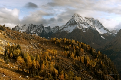 Larches And Mount Karnac From Jumbo Pass