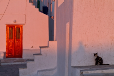 The Cat And The Door At Sunset