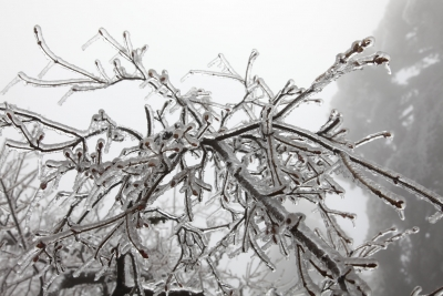 Crystal Clear Frozen Branches