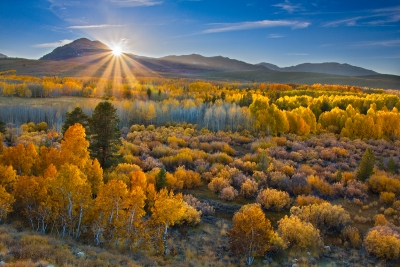 Aspen Kissed By The Equinox Sun