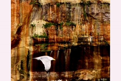 Gull At Picture Rocks