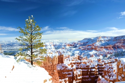 Early Snow At Sunset Point, Bryce Canyon