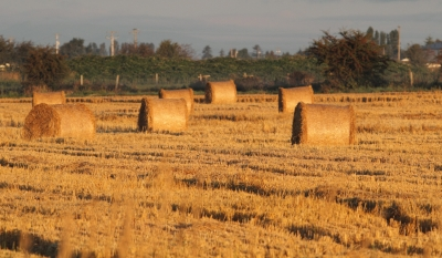 Baling Time In The Country