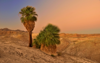 Five Palms Anza-borrego Sunset